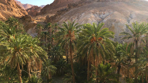 Amazing Oasis With Palm Trees In Rocky Canyon. 4K Video Footage