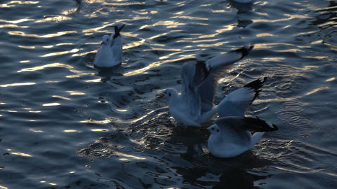 Seagull birds flying above the surface water sea slow motion Image