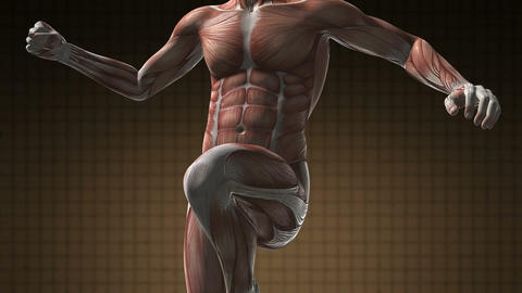 Human Muscle Anatomy Live Action