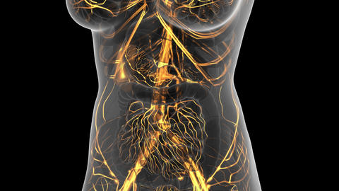 science anatomy scan of woman heart and blood vessels glowing ビデオ