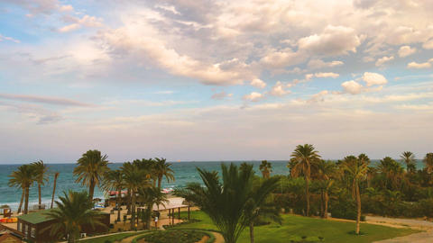 Amazing Tropical Beach View. Beautiful Sky, Flying Birds , Palms And Ocean Waves Footage