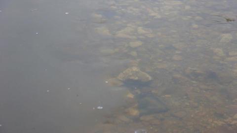 Slow flow of water in a quiet river ビデオ