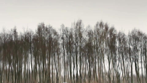 Trees reflected in water Footage