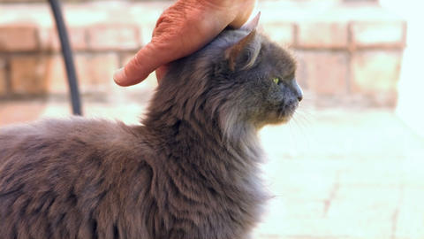 View of feminine hands petting a cat Live Action