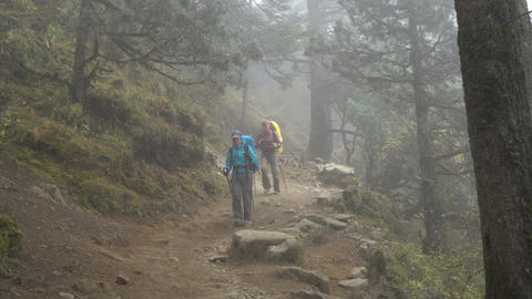 Tourists in the misty forest Footage