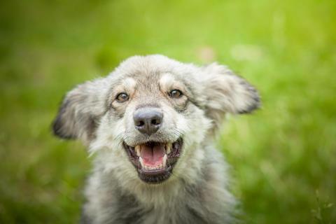 Joyful dog on a walk close up フォト