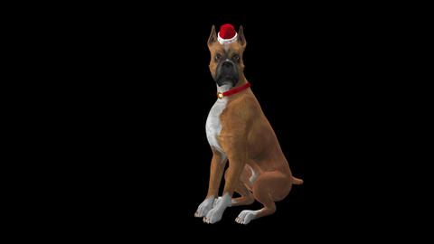 Dog Greeting for Winter Holidays - Boxer - Transparent with Sound Animation