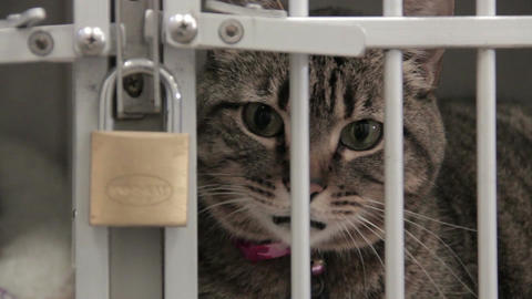 Close up cat in locked cage Live Action