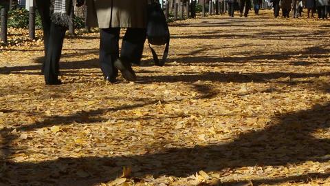 People walking in the fallen leaves of Ginkgo ライブ動画