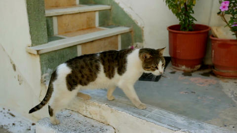 cat is going home. Greece Image