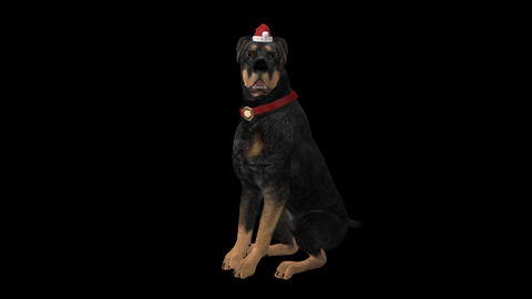 Dog Greeting for Winter Holidays - Rottweiler - Transparent with Sound Animation