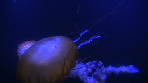 Glowing jellyfish pod in dark water Footage
