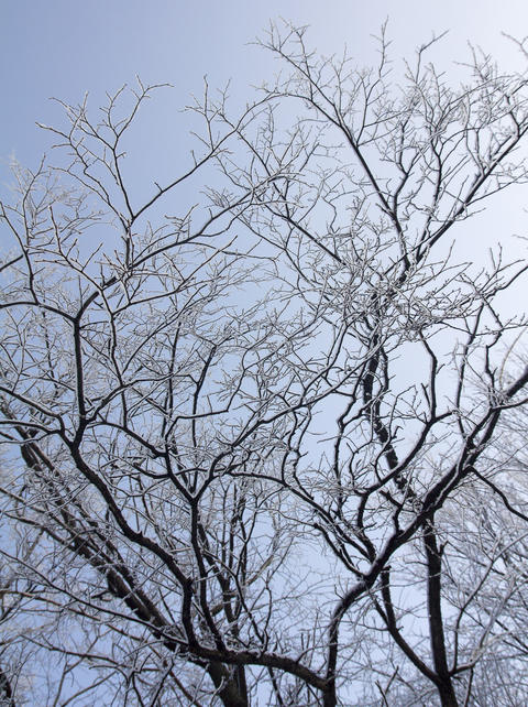 snow-covered branches of a tree without leaves on a sky background Photo