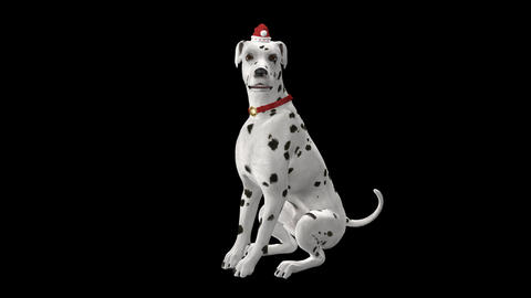Dog Greeting for Winter Holidays - Dalmatian - Transparent with Sound CG動画素材