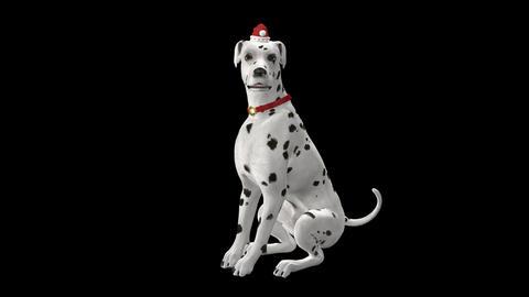Dog Greeting for Winter Holidays - Dalmatian - Transparent with Sound 애니메이션