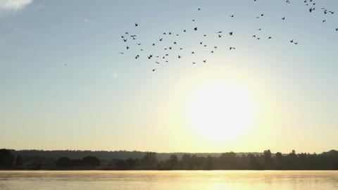 A flock of duck flying to the South over a lake at sunset in 4k Footage