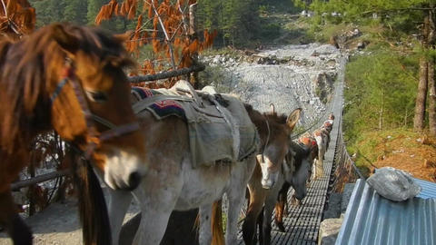 Transportation of goods on mules Footage