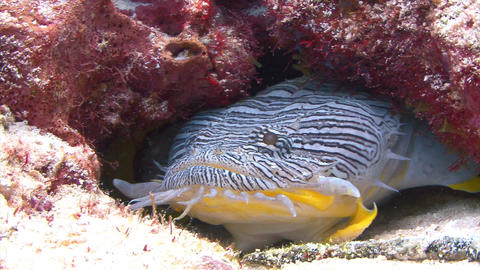 Stripped fish on seabed Footage