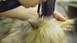 Dog in pet grooming salon Filmmaterial
