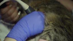Ultrasound diagnostic in veterinary clinic Filmmaterial