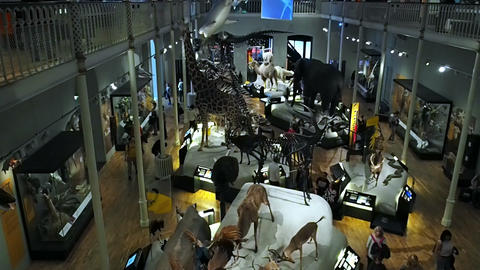 animals in museum, edinburgh Footage