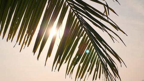 Coconut Palm Leaf Against Bright Morning Sun on Tropical Paradise Beach. Summer Footage