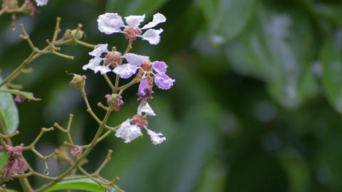Rain drops on wild flowers Filmmaterial