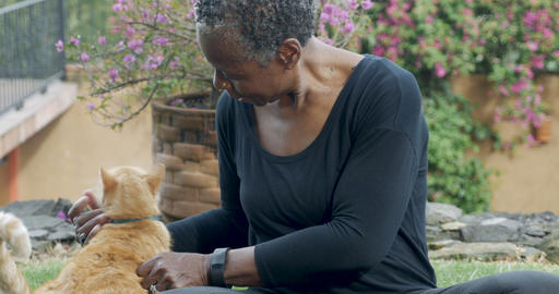 Beautiful elderly black woman in her 60s petting and scratching her domestic Footage