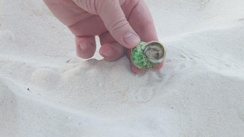 The man took his fingers a small hermit crab Footage