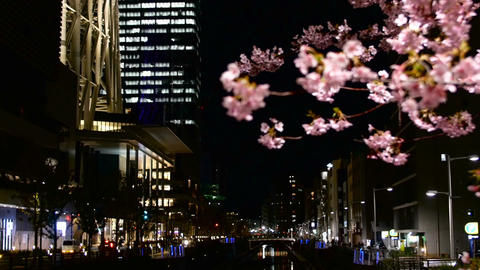 Zooming out of defocused street illumination to blooming cherry blossom Footage