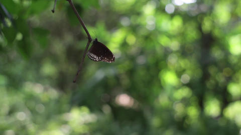 Butterfly on branch Live Action