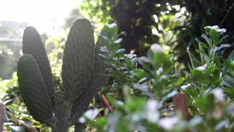 Sunny Cactus Garden stock footage