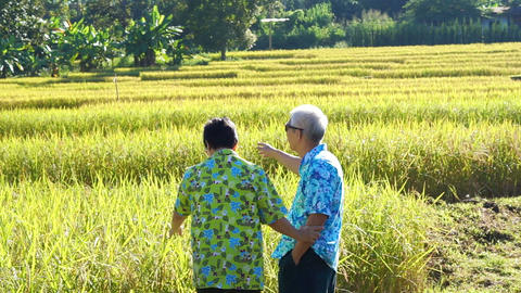 Video Asian senior couple walking and looking along rice field. Looking at nature and agriculture Live Action