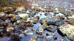 beautiful landscape design. Flooded spring woods and stones Footage