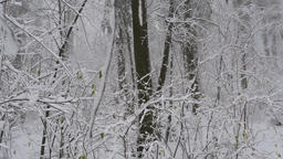 Shrub plants covered in snow and ice in beautiful winter forest Live Action