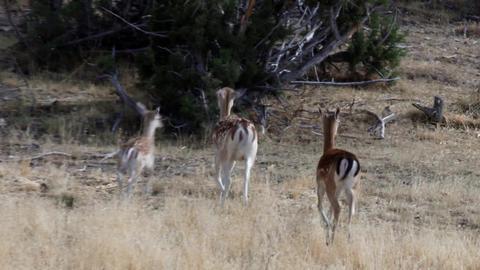 Follow deer family 1 Footage
