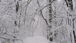 Stabilized shot: walking on a trail through a tunnel of snow covered trees in Footage