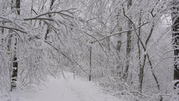 Stabilized shot: walking on a trail through snow covered trees in winter forest Footage