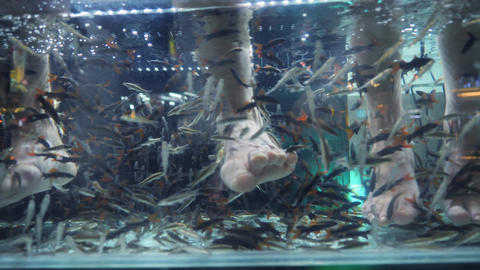 Small Fishes Eating Dead Skin and Cleaning Foot in Aquarium. Popular Thai Spa Footage