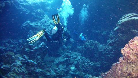 Scuba divers in the Red Sea GIF