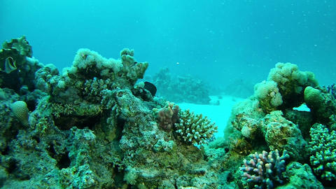 Coral reef in the Red Sea - Scuba diving Live Action