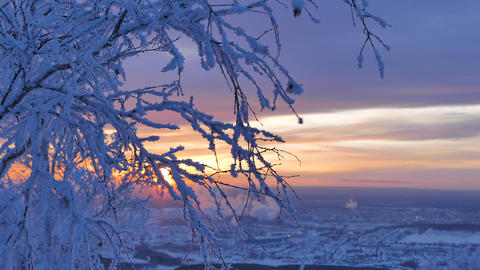 The setting sun over the branches of trees in the snow Footage