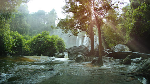 River Flows around Boulders and Trees after a Waterfall. with Sound GIF