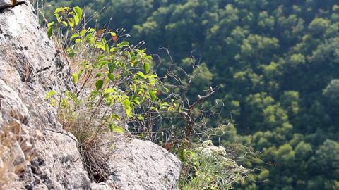 alpine plants Footage