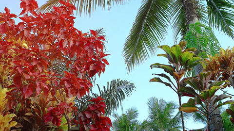 Coconut Palm and Colorful Plants in a Tropical Garden Footage