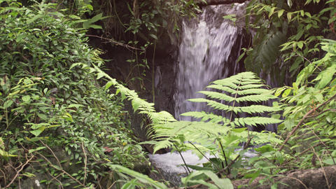 Natural Waterfall Flows into Tropical Mountain Pool Live Action