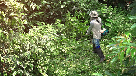 Local Laborer Uses Gas Powered Trimmer to Cut Dense Tropical Weeds. with Sound Live Action