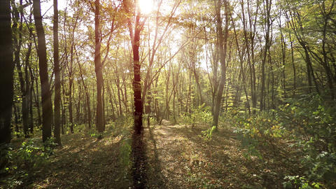 Sunbeams Filter through Forest Tree Branches in Autumn Footage