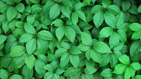 Gentle Breeze Stirring Leaves of Plants in a Garden. UltraHd 4k video Footage