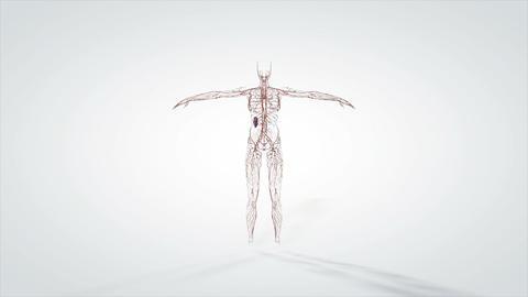 3d animated model human nervous system Live Action